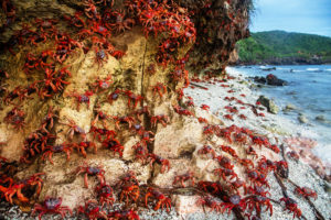 Crabs stick together on the shore