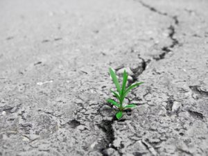 Personal growth for small business success