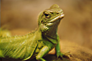 lizard brain is more powerful than thinking brain