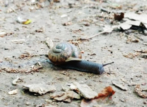 Logical faith works at snail pace